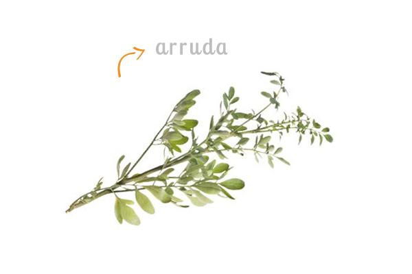 cz-decoracao-casa-ervas-arruda