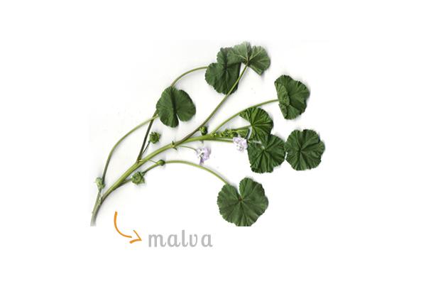 cz-decoracao-casa-ervas-malva